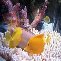 Kansas-city-sea-life-aquarium-aquariums-in-missouri