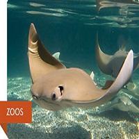 kansas-city-aquarium-aquariums-mo