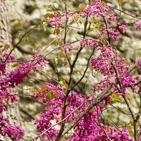 mcAlester-arboretum-in-columbia-mo-gardens--arboretums-mo