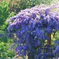 powell-garden-mo-gardens-arboretums-mo