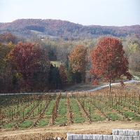chandler hill vineyards romantic day trip mo