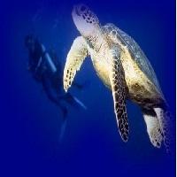 west-end-diving-scuba-diving-in-missouri