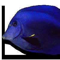 reef-tectonics-aquarium-mo