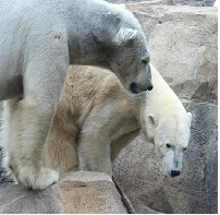 the-kansas-city-zoo